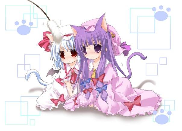 домашнее животное кошки