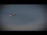 Edward Maya feat Vika Jigulina - Stereo Love (Official Video) - YouTube