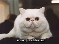 ...в среде владельцев кошек, которые, к сожалению, зачастую приводят к самым плачевным последствиям для животных.