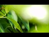Прозрачная зелень лета