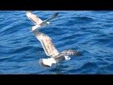 Евгений Мартынов - Чайки над водой