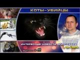 Выпуск 02. Коты-убийцы