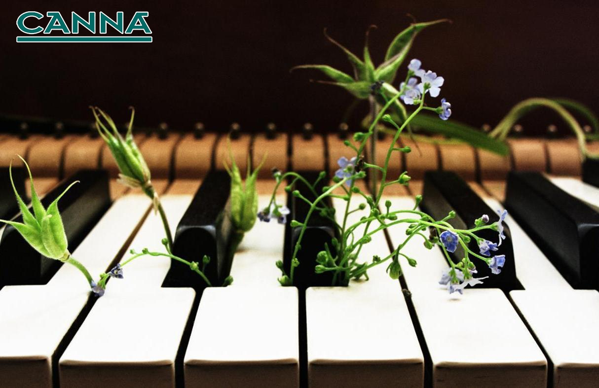 plants and music - HD 1400×787