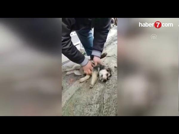 Köpeği masaj ve suni solunumla hayata döndürdü Video 7 ~Haberler 282