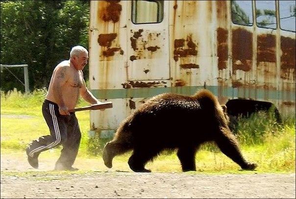 Медведь спасается от человека