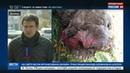 Новости на Россия 24 • В Луганской области нашли захоронение убитых мужчин со следами пыток