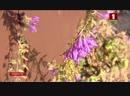 В Гомельской области цветут каштаны и распускаются первоцветы