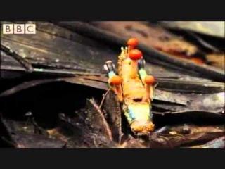 Тибетский гриб убийца