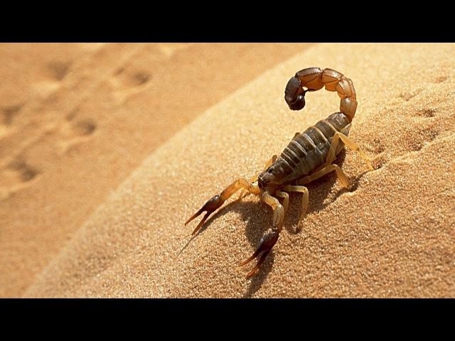 حيوانات العالم الأشد فتكاً | نات جيو وايلد ا
