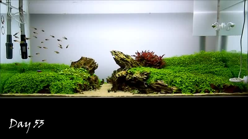 Aquascape THE ISLANDS Full Story (Creation,Failure,Progress,The Last Day)