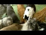 Защитники животных бьют тревогу - меховые рынки заполонили изделия из шкур домашних животных - Первый канал