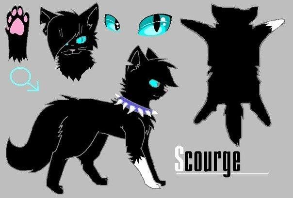 Ravenpaw коты воители