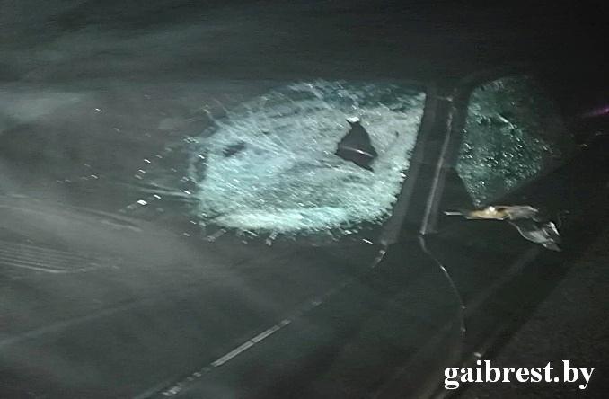 На трассе М1 автомобиль БМВ насмерть сбил пешеходов - один был в инвалидной коляске