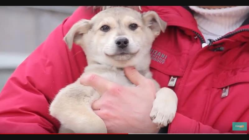 Хочу домой. Бездомной собаке Москвичке нужна помощь. Где взять щенка?