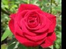 Доброе утро и прекрасного настроения на весь день ТЕБЕ МИЛАЯ ЛЕРАЧКА Я ТЕБЯ ОЧЕНЬ СИЛЬНО ЛЮБЛЮ СОЛНЫШКО Я СЕГОДНЯ НА РАБОТУ НЕ ЭДУ ЕШО ГОРЛО БОЛИТ