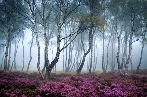 Для тех, кто зимой истосковался по зелени и ярким краскам, мы сделали подборку лучших снимков лесов