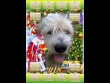 Сборы на проводы старого года Петуха, пора ему уступить права Жёлтой земляной собаке по имени Тотоша!!!