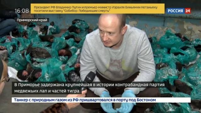 Новости на Россия 24 • В Приморье задержали контрабандную партию медвежьих лап