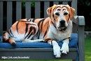 А вы знаете, зачем нужны краски для животных?