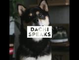 Dachi Speaks. YEEZY BOOST 350 V2 Zebra video review