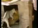 пёс насильник...
