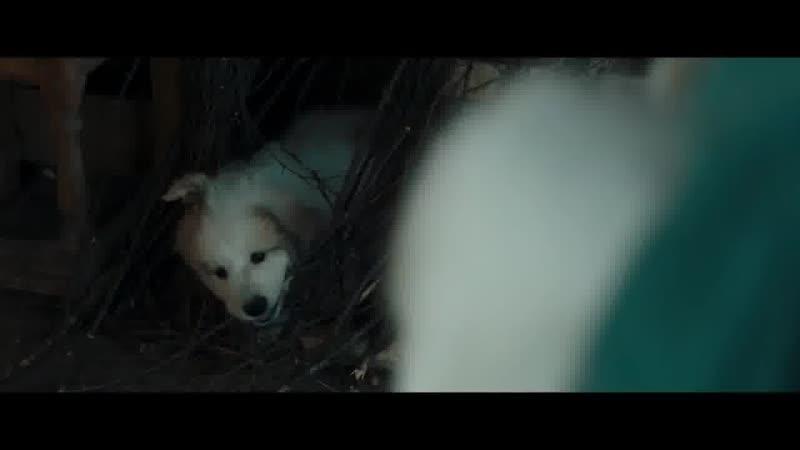 Белль и Себастьян Друзья навек (2017)