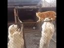 бесстрашный кот