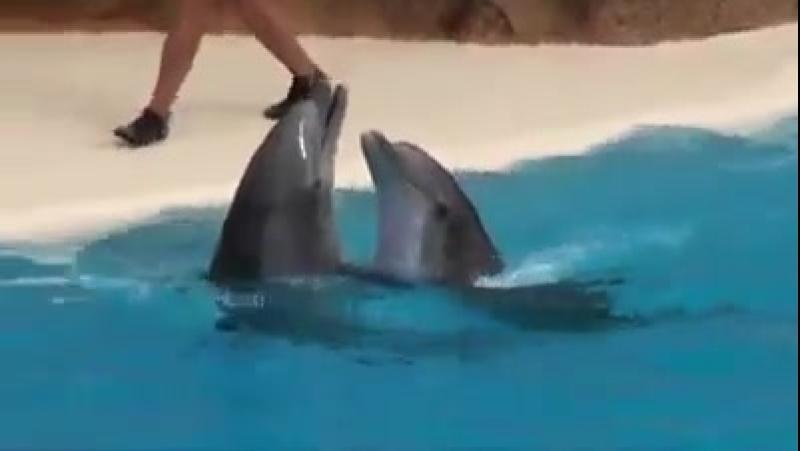 Восхищение дельфинами
