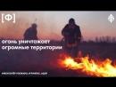 Добровольцы помогают тушить лесные пожары по всей России