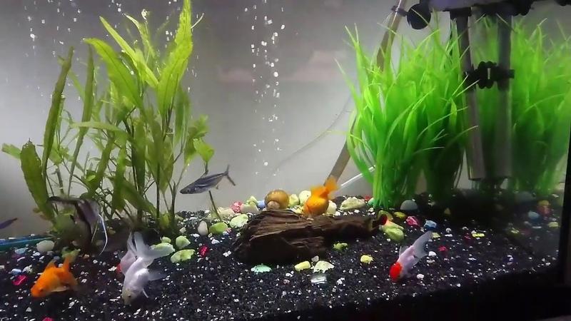 Akvaryuma balık salma nasıl olmalıdır
