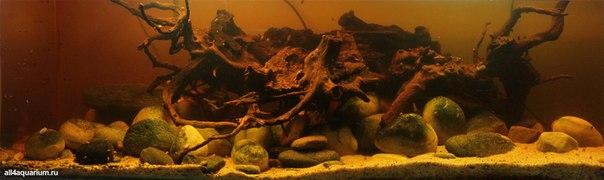Конкурс дизайна биотопных аквариумов JBL 2014 Mj3taDfP2rg