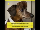 3D–принтер спас жизнь больной собаке АКУЛА