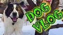 DogVlog. Как я охраняю дом. Говорящая собака Московская сторожевая Булат