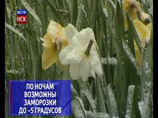 В Новосибирской области резко ухудшится погода - пройдет снег