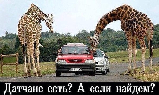 http://cs614631.vk.me/v614631017/47eb/7mLHxklLIz0.jpg