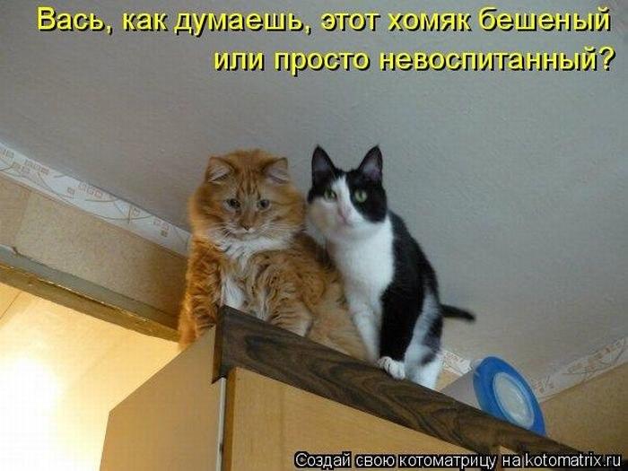 Дьяченко когда кошки рано утпом мяучат иногда там