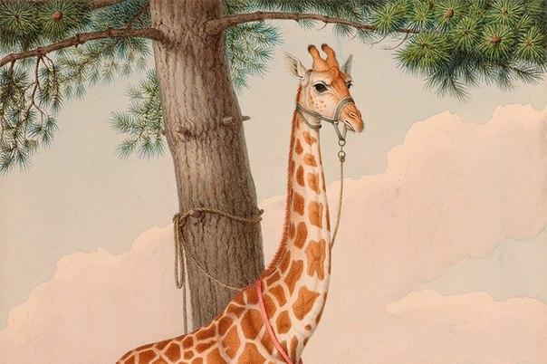 Как Зарафа, первый жираф Франции, стала культурным событием