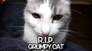 R. I. P. Grumpy Cat - We'll never forget you.