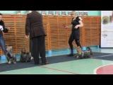 2013-04-21 ноябрьск всер выставка йорки сравнение на лпп(2)