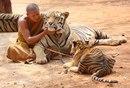 Экскурсия в Храм Тигров в Таиланде