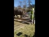 Купание слонов в зоопарке 1.5.2018 Ростов-на-Дону Главный