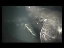 Вчені зафіксували на камери гігантську акулу Величезна акула мегалодон мешкала 5 20 млн років тому і важила понад сто тонн