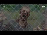 Ходячие мертвецы - кровавый анонс 5 сезона!