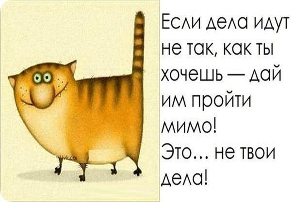 http://cs411231.vk.me/v411231954/82d9/3IayRp4mPAg.jpg