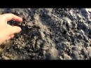 Catching shrimps | Stradbroke Island | Australia