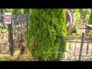 Подозреваемый в краже растений с кладбищ Смоленск