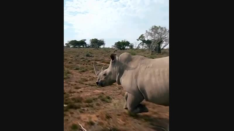 Drone pilot captures rhinos like never before on film