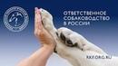 Открытое обращение Президента РКФ в связи с гибелью собаки в городе Курск