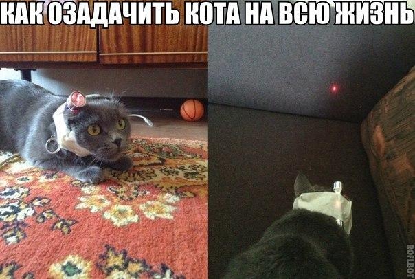 http://cs14107.vk.me/c7008/v7008553/16cd9/htdT0LNdMsk.jpg