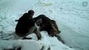 Спасение диких животных оказавшихся в беде.